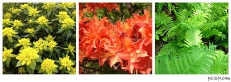picisto-20130529174321-439095