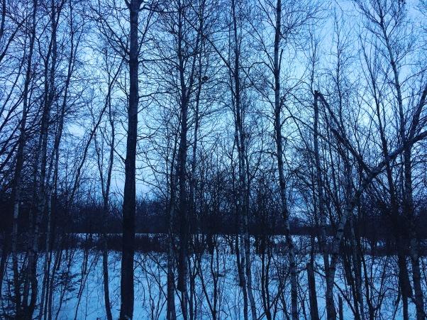 Vermont Woods in Winter