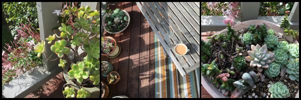 Santa Monica deck garden