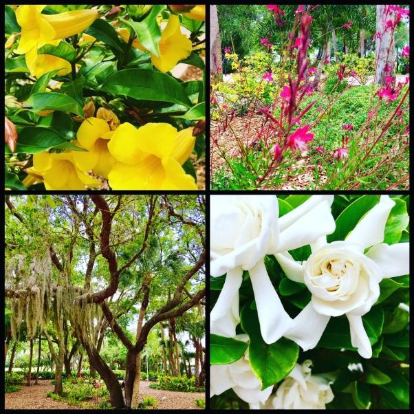 Flowers of Florida
