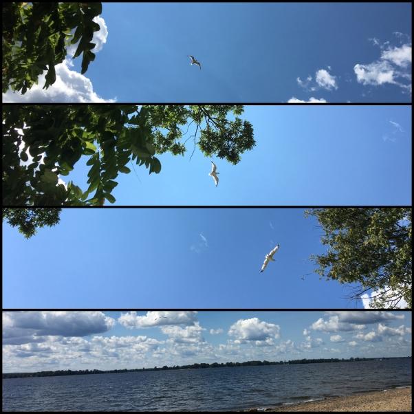 Seagull flying over Lake Champlain