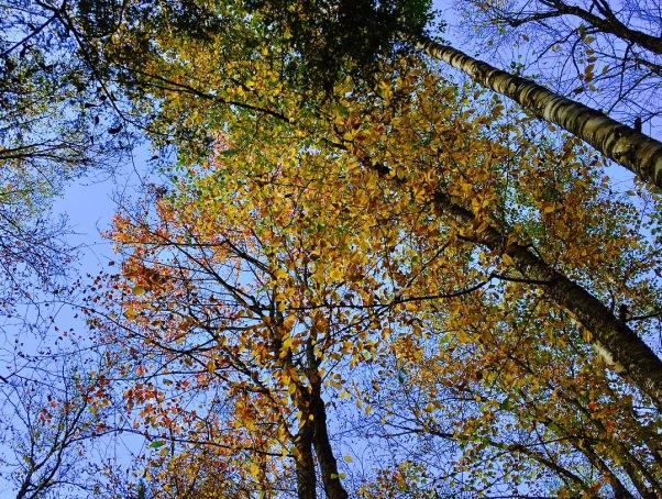 Autumn trees in Stowe Vermont
