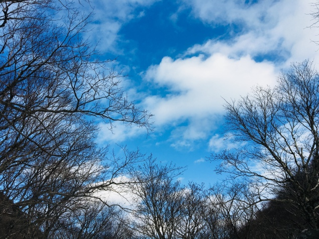 Blue sky on a winter day