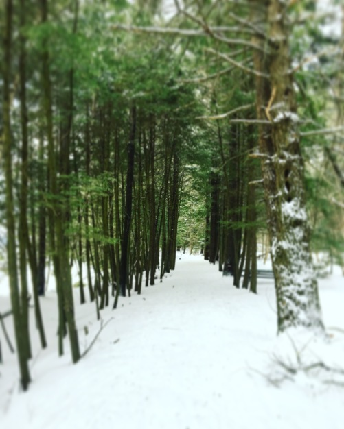 snowy path in the woods