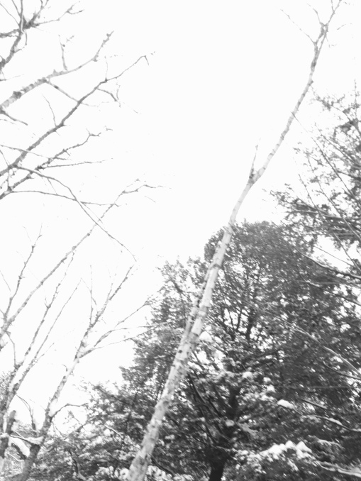 B&W photo of bare winter trees