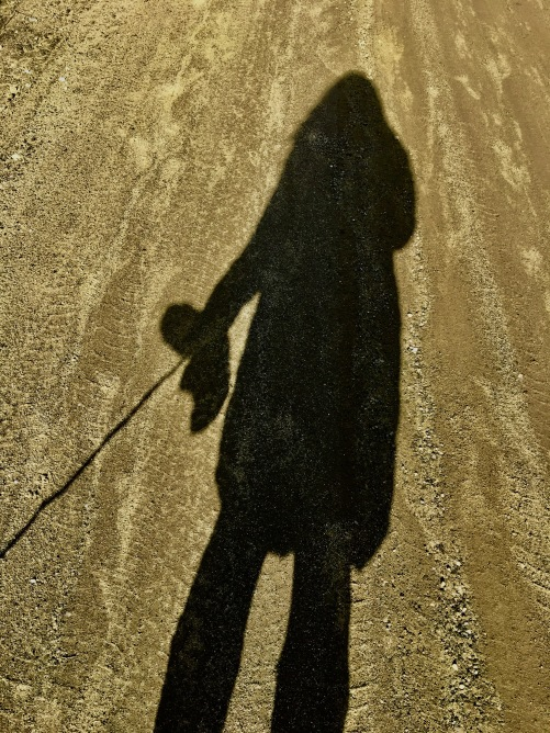 shadow on the dirt road during mud season