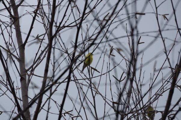 bird on the bare branch