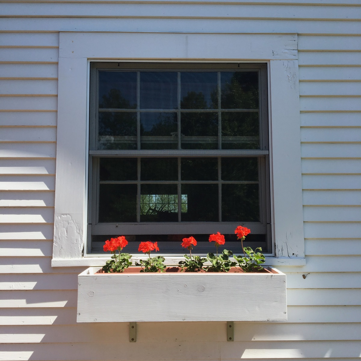 flowers in a windowbox