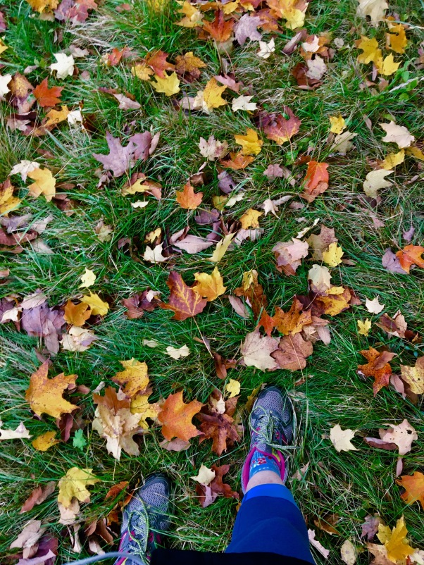 Fall leaves scattered over the grassy field