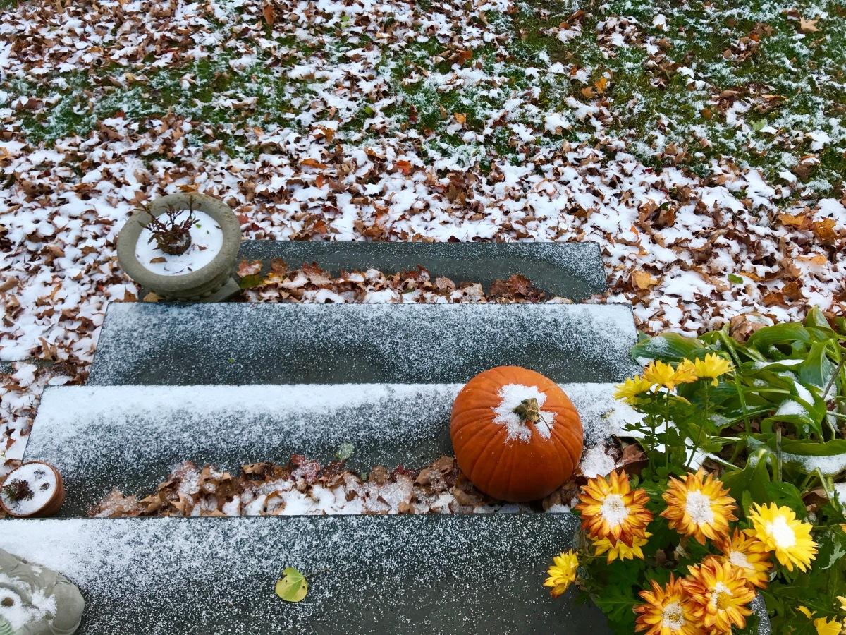 snow on fall leaves