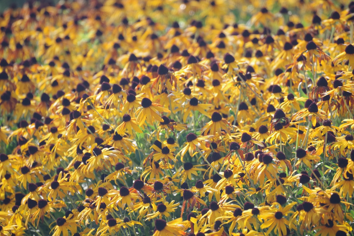 closeup of a field of fall flowers