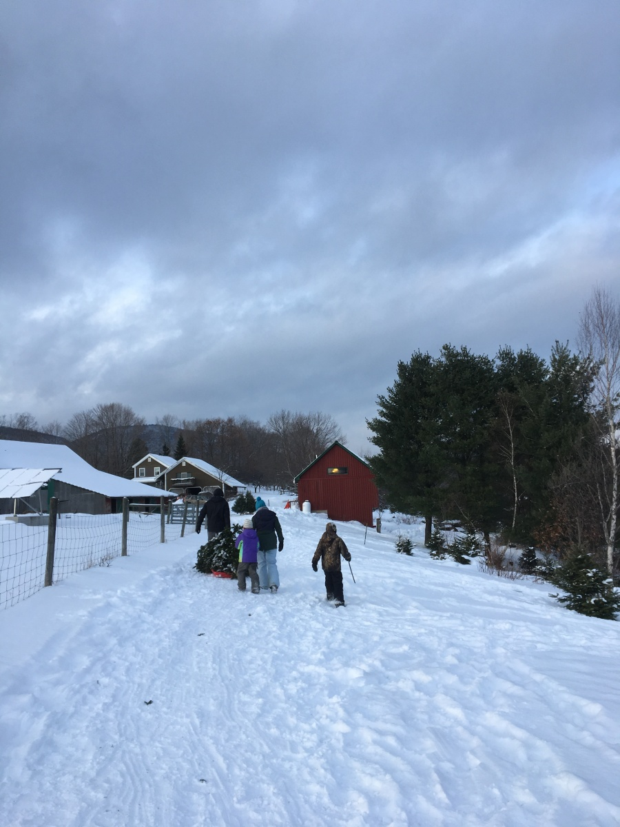 Christmas Tree farm