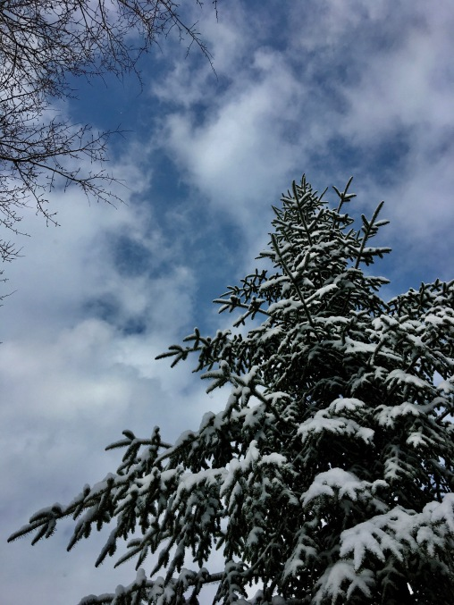 snowy evergreen and sky