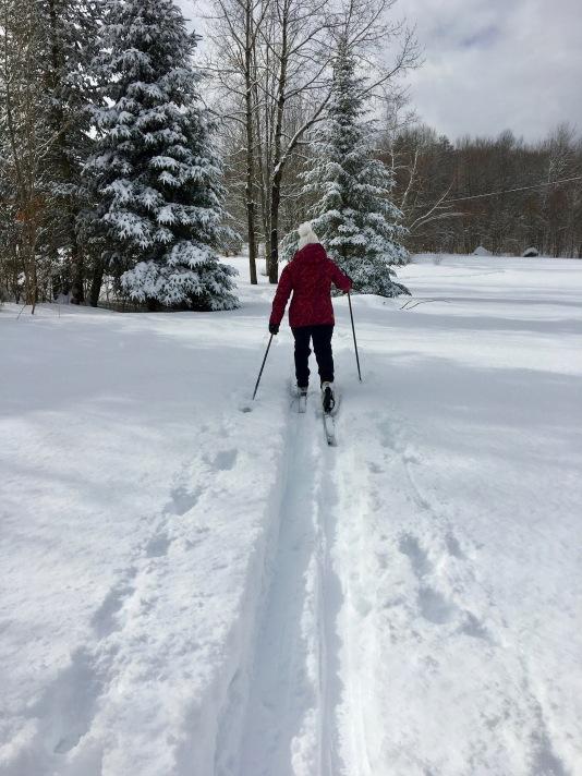 nordic ski across the snowy field