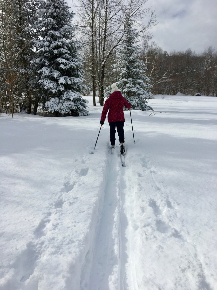 nordic ski across the snowy field
