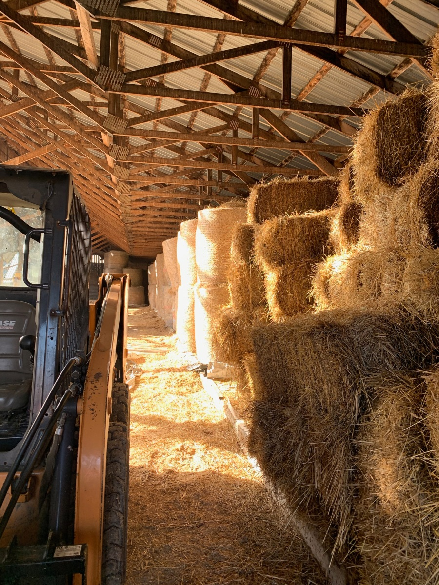 hay in a barn