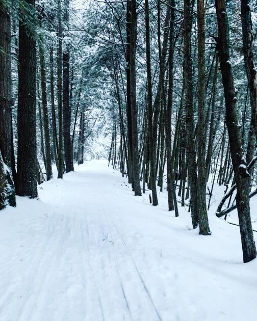 snowy woods in Vermont